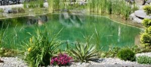 Piscine écologique dans un jardin