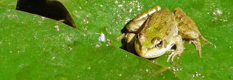 La faune des piscine naturelles
