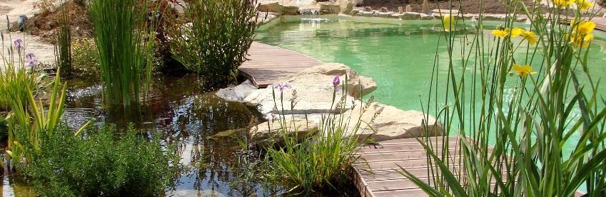 Les plantes d'une piscine écologique